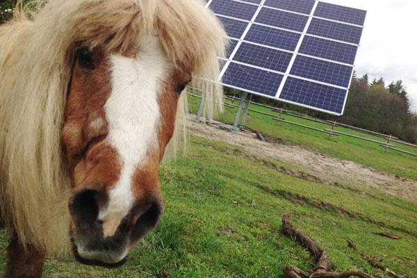 Solaranlage auf Freifläche